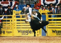 Picture of W-W Livestock Systems Rodeo Bucking Chute being used at the NFR, National Finals Rodeo.